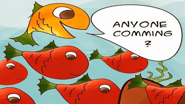 webdevfish.com Cover