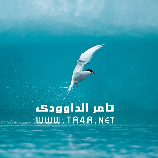 ta4a.us Icon