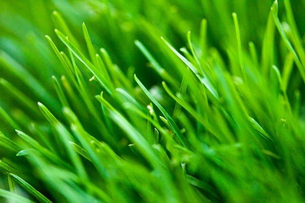 ecogreenhosting.co.uk Cover